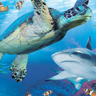 Giant turtle and shark swimming